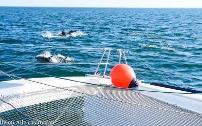 Ile ou Aile, les dauphins, le Fort Boyard et France 3